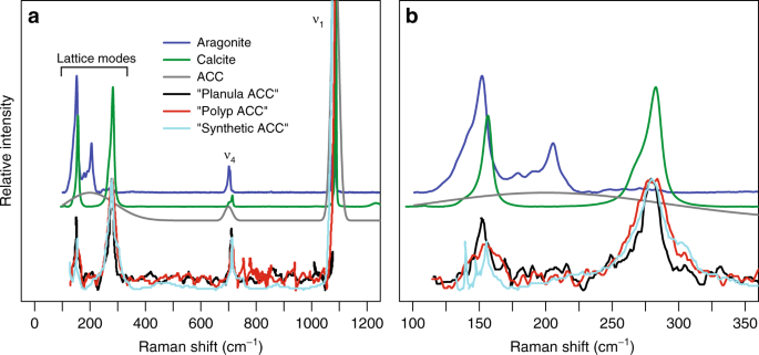 characterizing coral skeleton mineralogy with raman spectroscopy