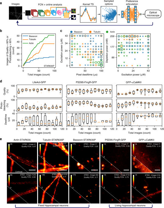 A machine learning approach for online automated optimization of super-resolution optical microscopy