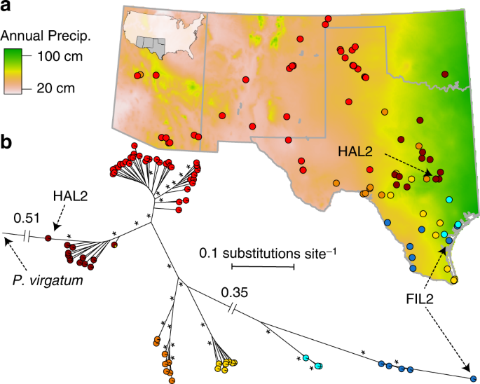 The genomic landscape of molecular responses to natural drought ...