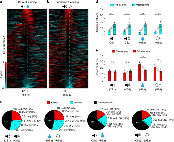 Population coding of valence in the basolateral amygdala