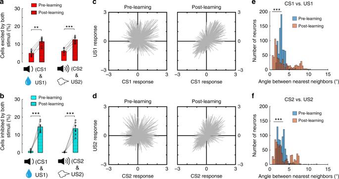 Potion coding of valence in the basolateral amygdala | Nature ... on