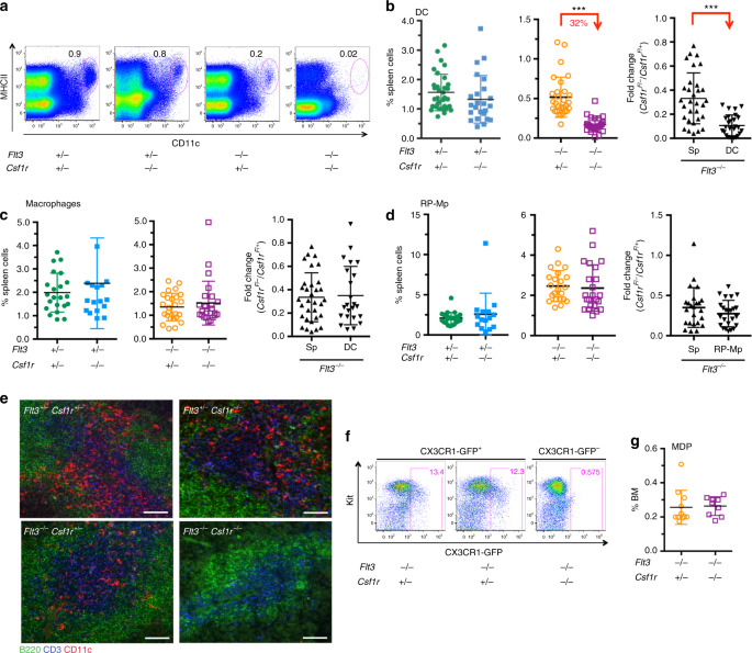 CSF1R regulates the dendritic cell pool size in adult mice