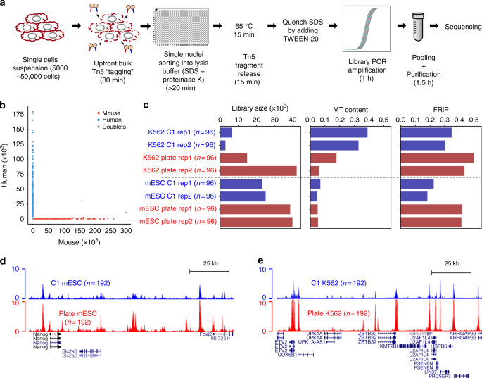 A rapid and robust method for single cell chromatin