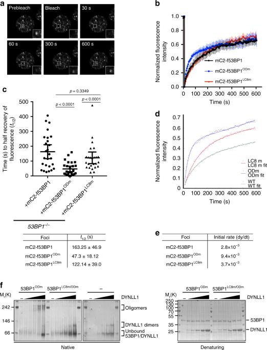 The ASCIZ-DYNLL1 axis promotes 53BP1-dependent non-homologous end
