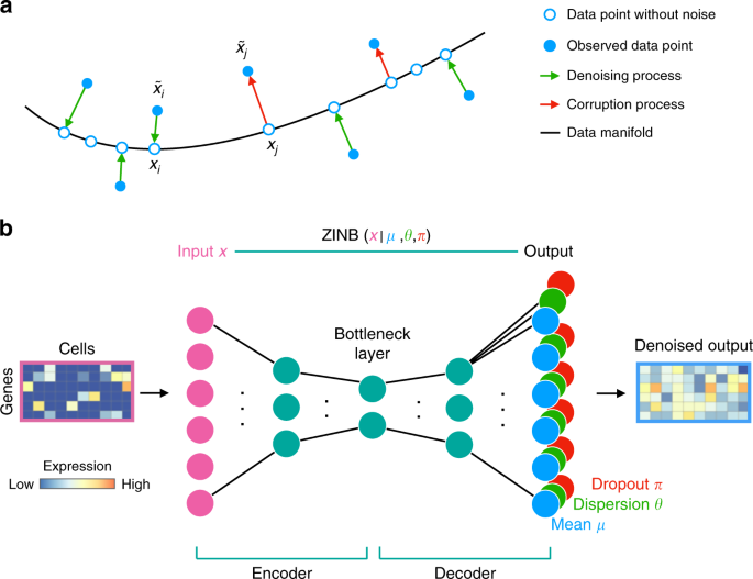 Single-cell RNA-seq denoising using a deep count autoencoder