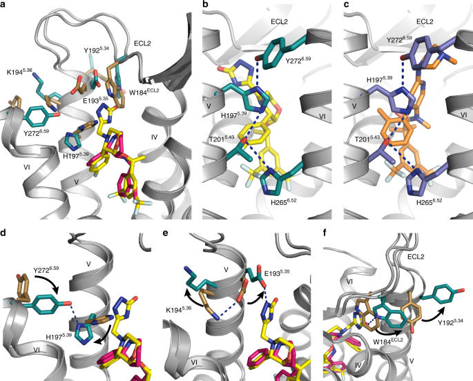 Crystal structures of the human neurokinin 1 receptor in complex with clinically used antagonists