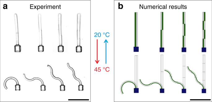 Controlling the shape of 3D microstructures by temperature and light