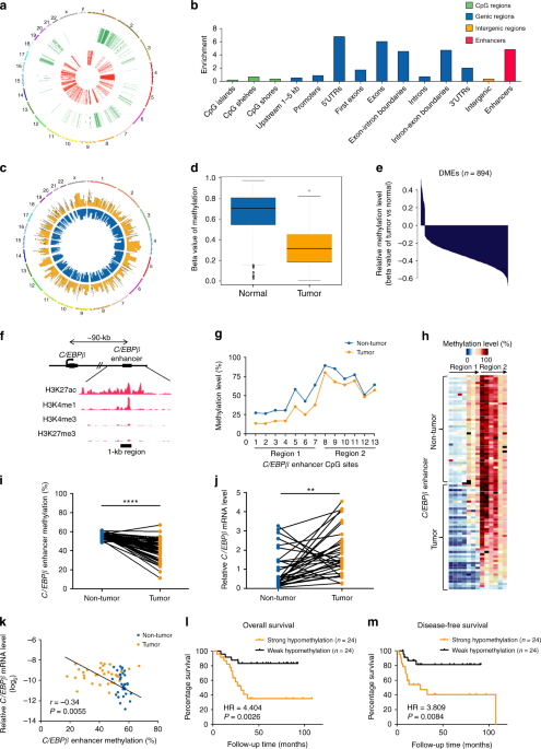 QnA VBage Aberrant enhancer hypomethylation contributes to hepatic carcinogenesis through global transcriptional reprogramming