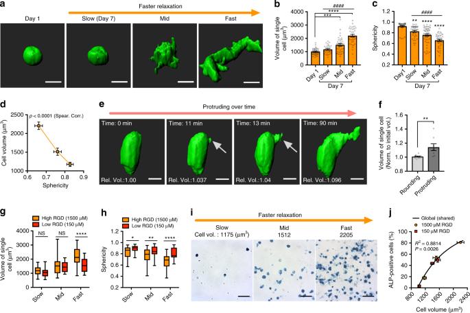 Volume expansion and TRPV4 activation regulate stem cell