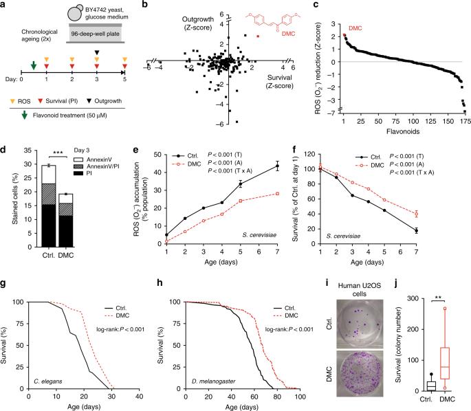 The flavonoid 4,4′-dimethoxychalcone promotes autophagy-dependent longevity across species