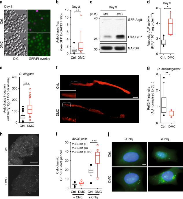 The flavonoid 4,4′-dimethoxychalcone promotes autophagy-dependent longevity across species