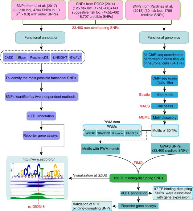 Functional genomics reveal gene regulatory mechanisms underlying