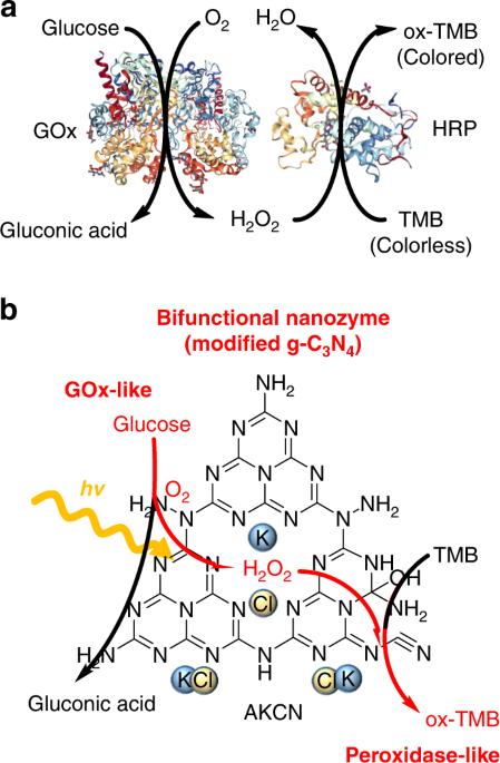 Modified carbon nitride nanozyme as bifunctional glucose