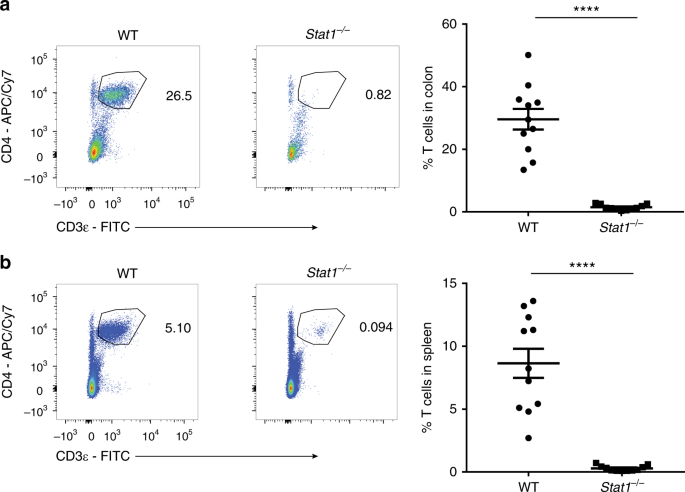 STAT1 signaling shields T cells from NK cell-mediated cytotoxicity | Nature Communications