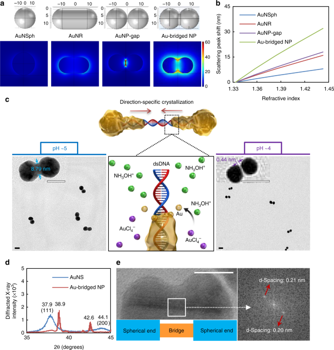 Single gold-bridged nanoprobes for identification of single