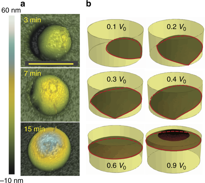 Fundamental aspects to localize self-catalyzed III-V nanowires on silicon