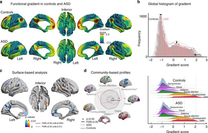 Atypical functional connectome hierarchy in autism   Nature