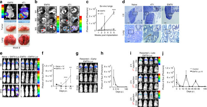 Primary tumor-induced immunity eradicates disseminated tumor cells