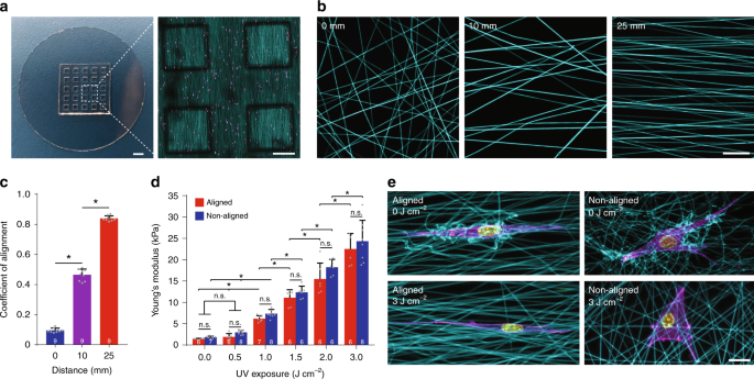 Actomyosin contractility-dependent matrix stretch and recoil