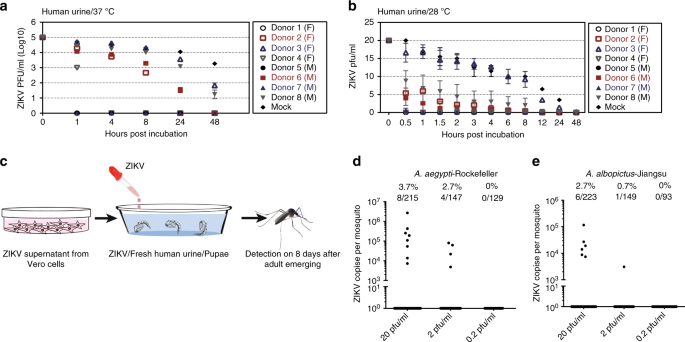 Aedes mosquitoes acquire and transmit Zika virus by breeding
