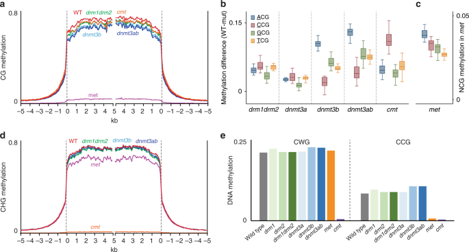 RdDM<i>-</i>independent de novo and heterochromatin DNA methylation by plant CMT and DNMT3 orthologs