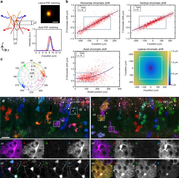 Multicolor multiscale brain imaging with chromatic multiphoton serial microscopy