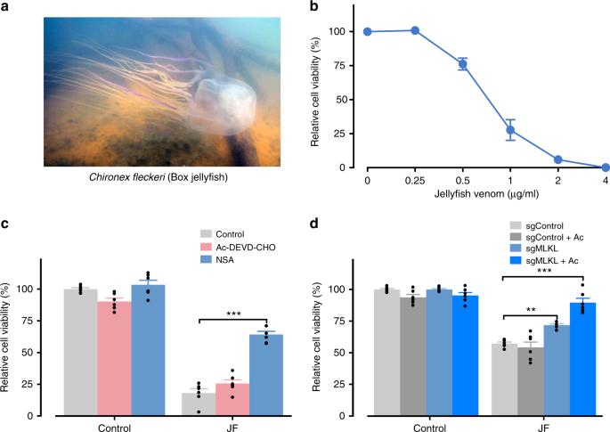 Molecular dissection of box jellyfish venom cytotoxicity