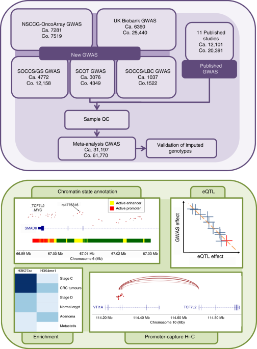 Association Analyses Identify 31 New Risk Loci For Colorectal Cancer Susceptibility Nature Communications
