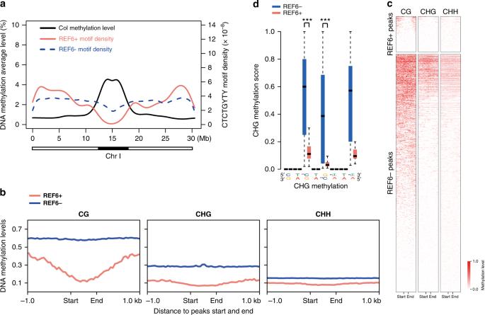 DNA methylation repels targeting of Arabidopsis REF6