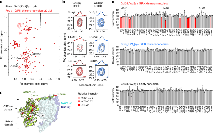 Structural mechanism underlying G protein family-specific regulation of G protein-gated inwardly rectifying potassium channel