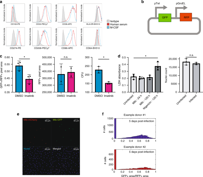 Heterogeneous GM-CSF signaling in macrophages is associated with control of Mycobacterium tuberculosis