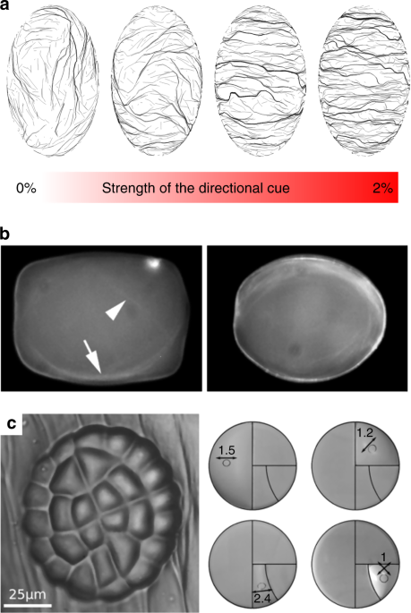 Sensational Are Microtubules Tension Sensors Nature Communications Wiring Digital Resources Inamasemecshebarightsorg
