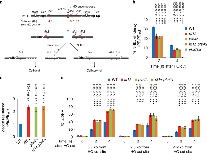 Rif1 S-acylation mediates DNA double-strand break repair at the inner nuclear membrane