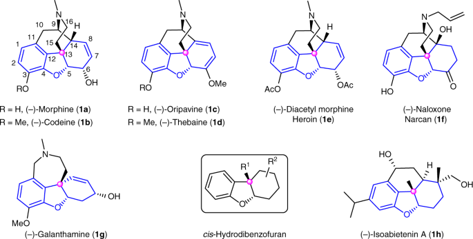 Enantioselective synthesis of cis- hydrobenzofurans bearing