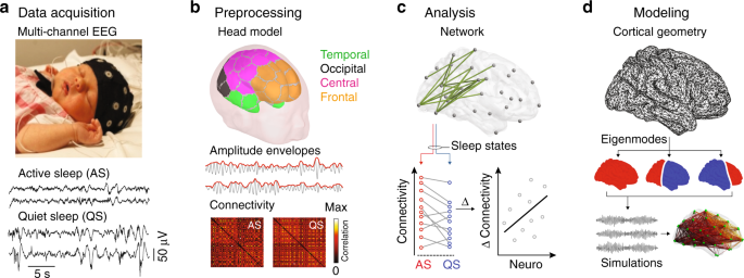 Large-scale brain modes reorganize between infant sleep