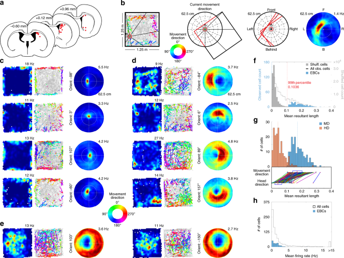 Neuronal Representation Of Environmental Boundaries In Egocentric Coordinates Nature Communications