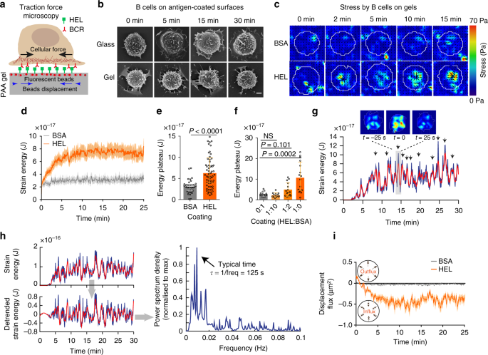 Actomyosin-driven force patterning controls endocytosis at
