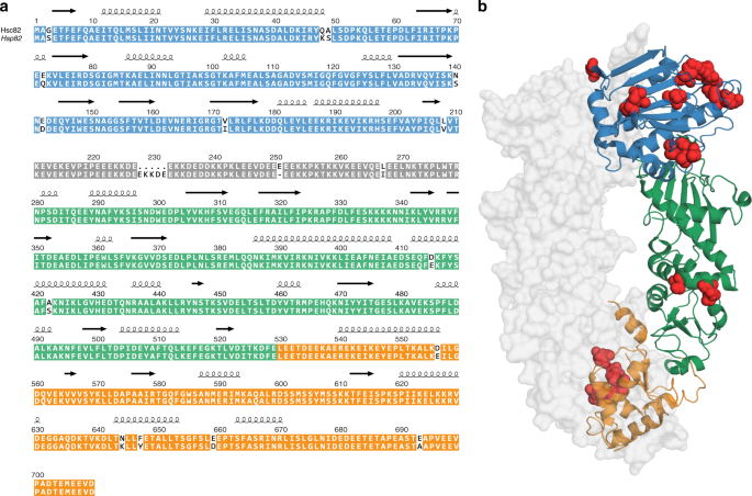 The Hsp90 isoforms from S  cerevisiae differ in structure, function