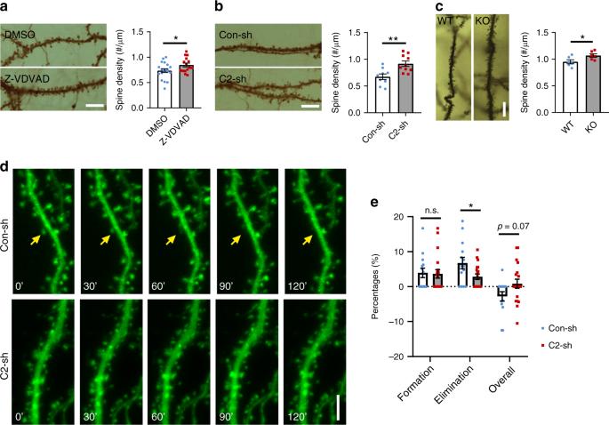 Caspase-2 promotes AMPA receptor internalization and cognitive