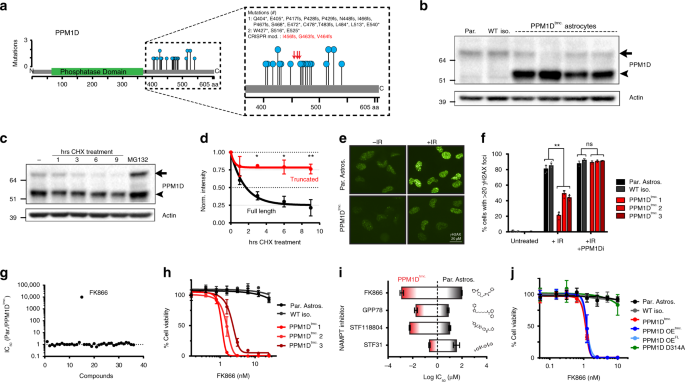 PPM1D mutations silence NAPRT gene expression and confer