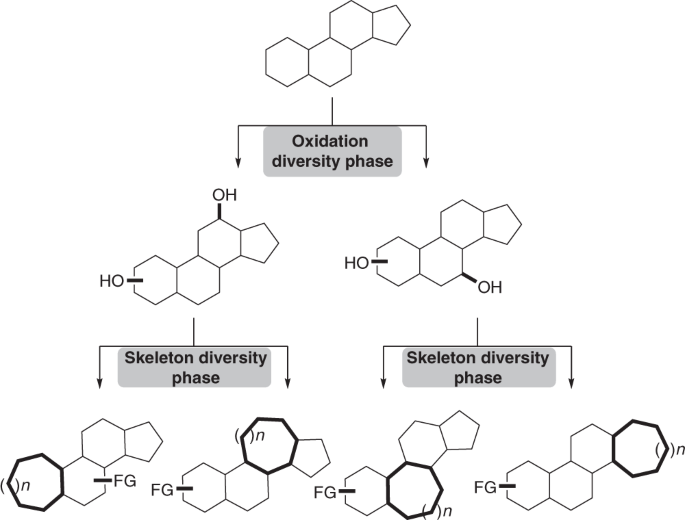 A general strategy for diversifying complex natural products ... on