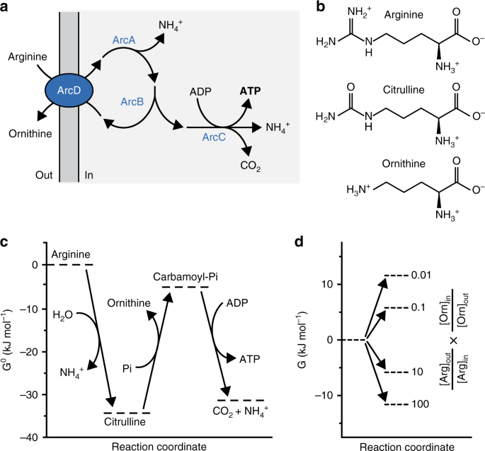 A synthetic metabolic network for physicochemical homeostasis