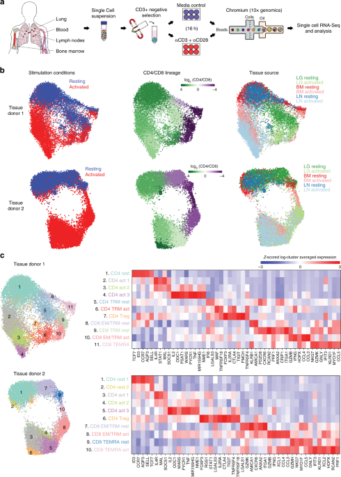 Single-cell transcriptomics of human T cells reveals tissue and activation signatures in health and disease