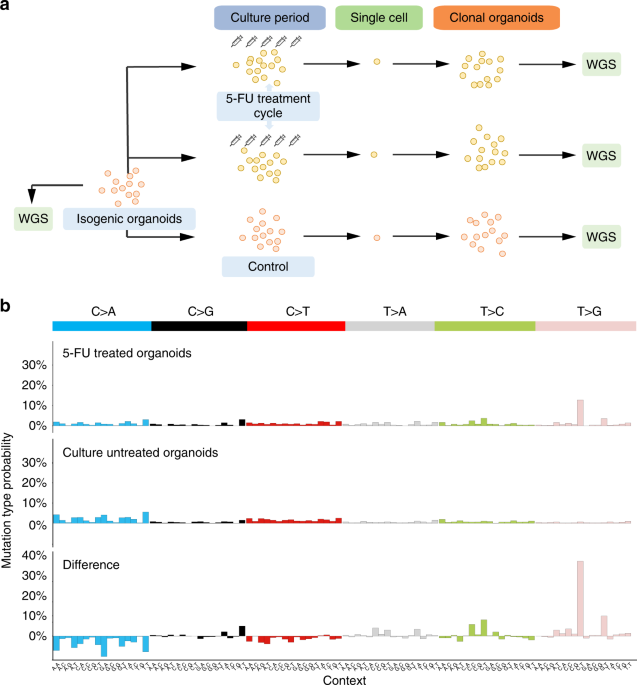 5 Fluorouracil Treatment Induces Characteristic T G Mutations In Human Cancer Nature Communications