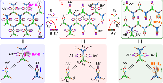 Stiffness-switchable DNA-based constitutional dynamic network hydrogel