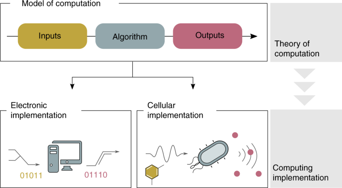 Pathways to Cellular Supremacy in Biocomputing