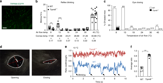 TRPV1 activity and substance P release are required for corneal cold nociception