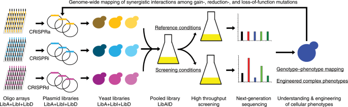 Multi-functional genome-wide CRISPR system for high throughput genotype–phenotype mapping