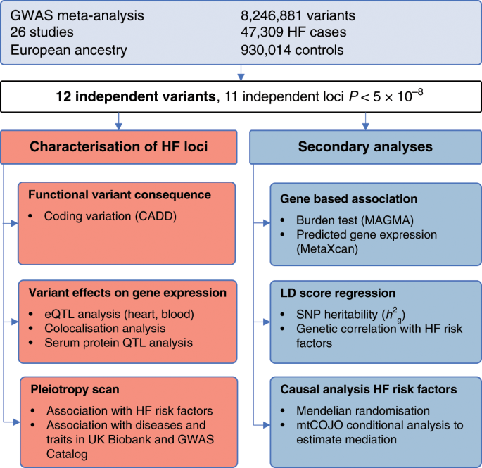 Genome Wide Association And Mendelian Randomisation Analysis Provide Insights Into The Pathogenesis Of Heart Failure Nature Communications