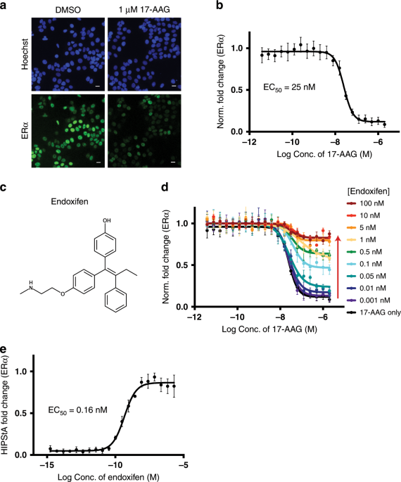 Chaperone Mediated Detection Of Small Molecule Target